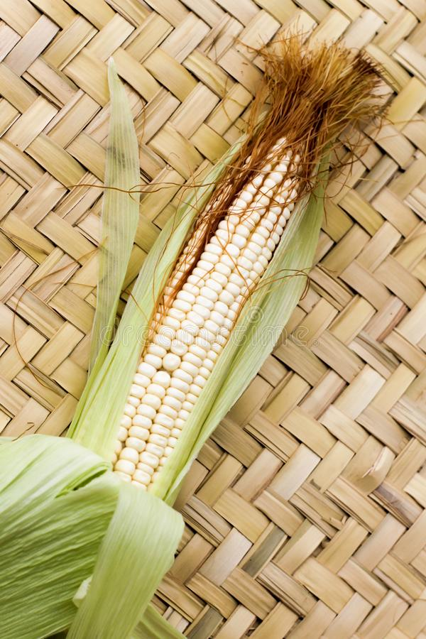 在山梨上的玉米植物 免版税库存图片