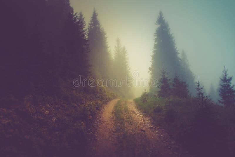 在山森林的雾的路 免版税库存照片