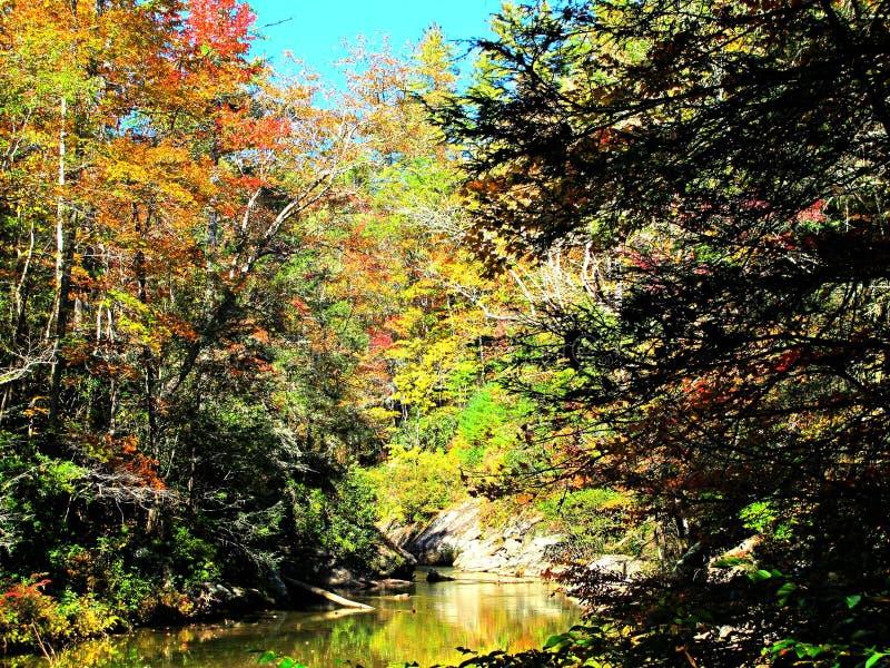 在山河的秋叶 免版税库存照片