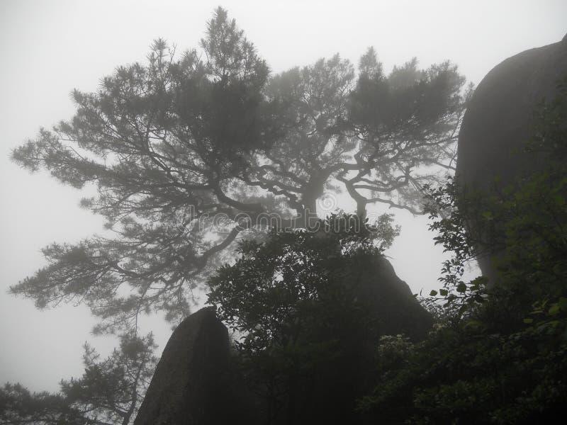 在山的一棵不可思议的树 免版税库存图片