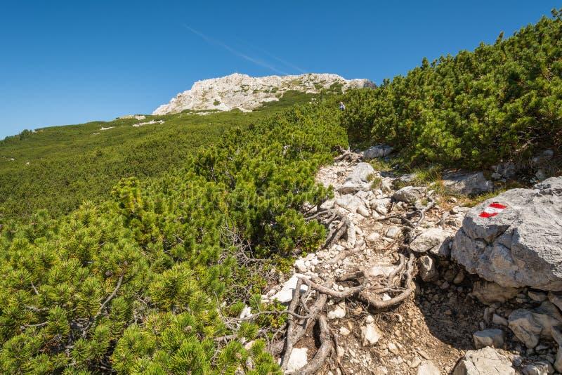在山的上面的路 白云岩风景 Oclini通行证,南蒂罗尔,意大利 免版税图库摄影
