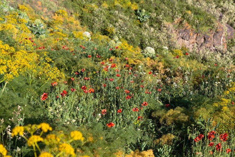 在山的五颜六色和富有的植被 免版税库存图片