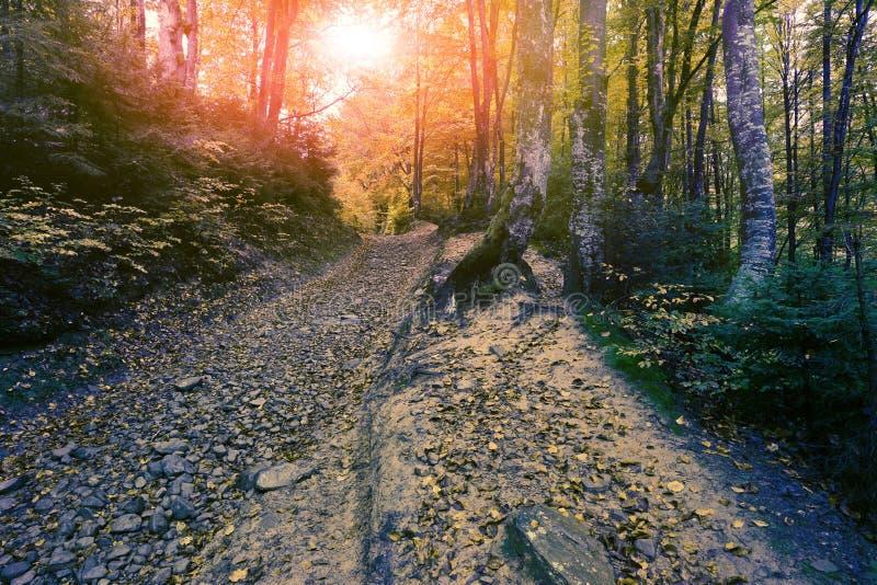在山的五颜六色的风景,美国旅行,秀丽世界 免版税库存照片