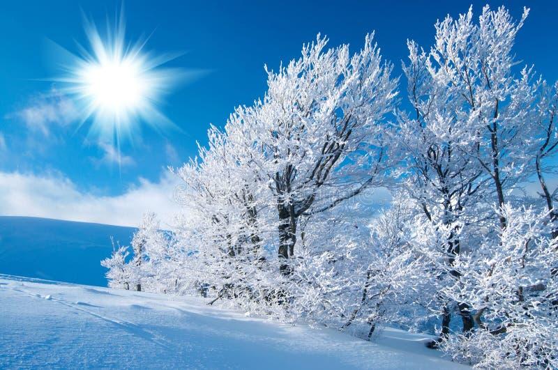在山的冬天 免版税库存图片