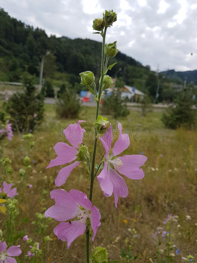 在山的夏天花 库存照片