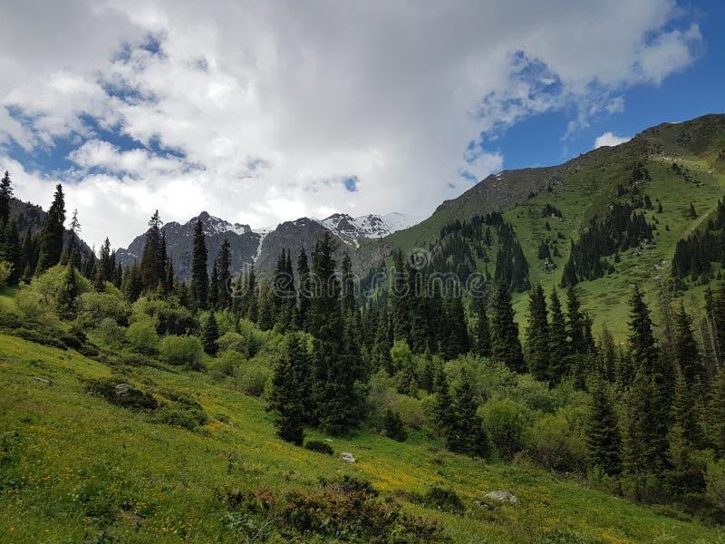 在山的夏天风景 库存图片