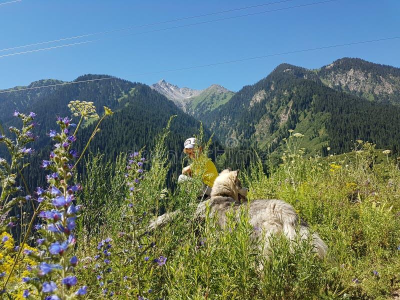 在山的夏天 库存照片