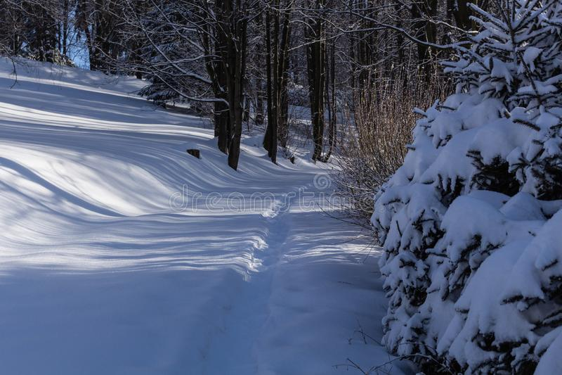 在山的寒冷冬天早晨foresty与积雪的冷杉木 山精采室外场面  自然概念秀丽  免版税库存照片