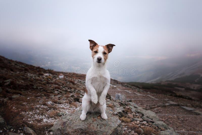 在山的小狗 旅行与宠物 免版税库存照片
