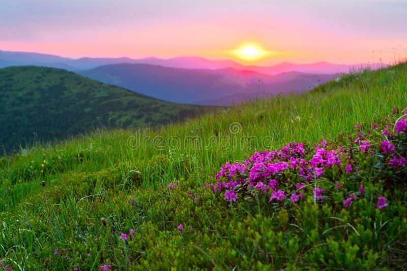 在山的日出 库存照片
