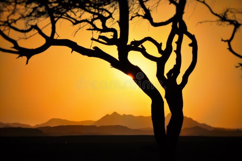在山的日落与与发光通过云彩山云彩的太阳的树 库存照片