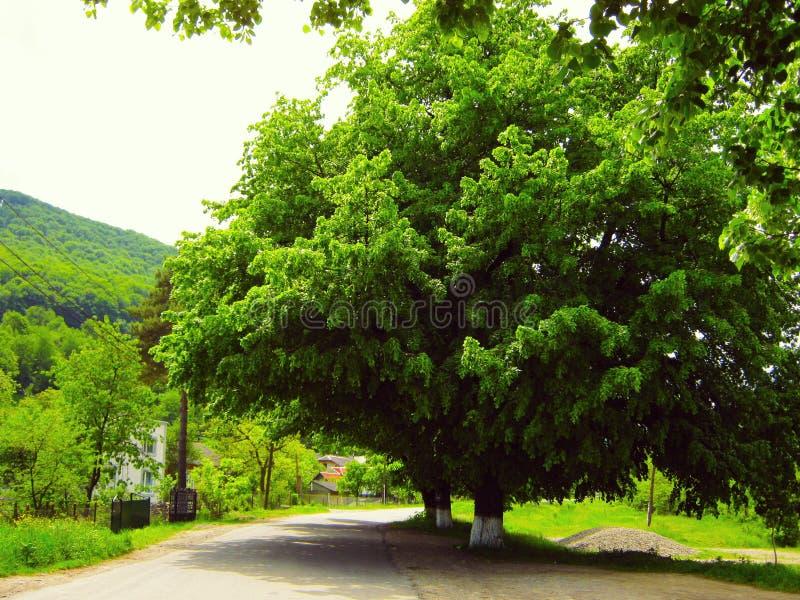 在山的春天风景,绿色森林 免版税库存图片