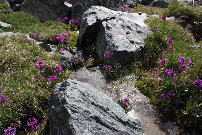 在山的春天 库存照片