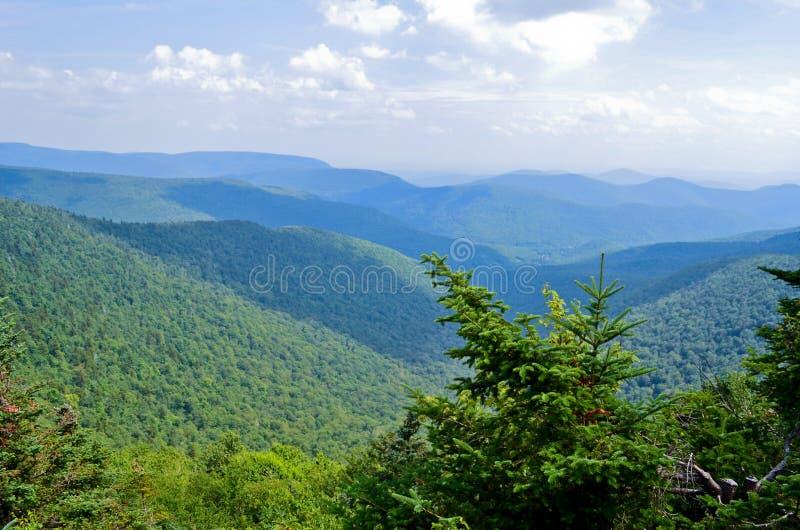 在山的杉树 免版税库存图片