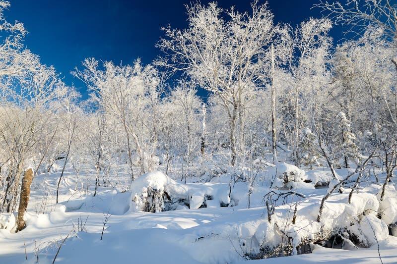 在山的纯净的白色雪风景 免版税库存图片