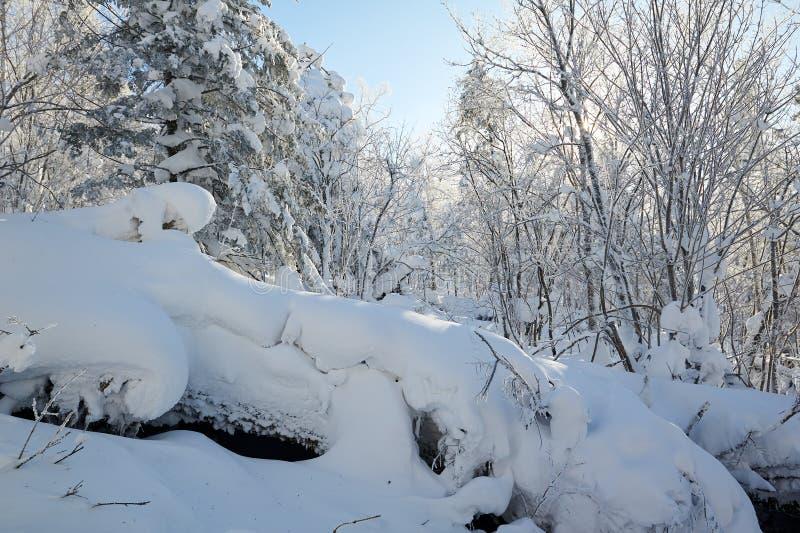 在山的纯净的白色雪 免版税库存图片