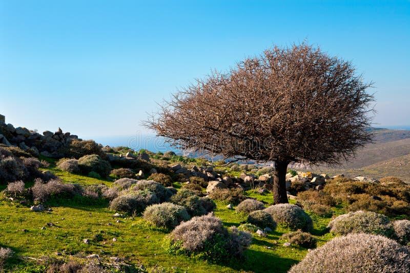 在山的结构树 免版税库存照片