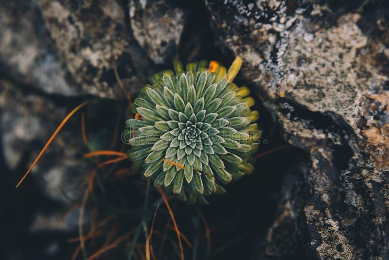 在山的绿色花背景 免版税库存图片