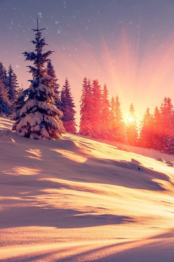 在山的美好的冬天风景 积雪的针叶树树和雪花看法在日出 圣诞快乐和愉快的N 免版税库存照片