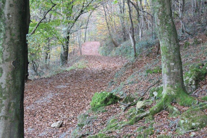 在山的美好的秋天树型视图 图库摄影