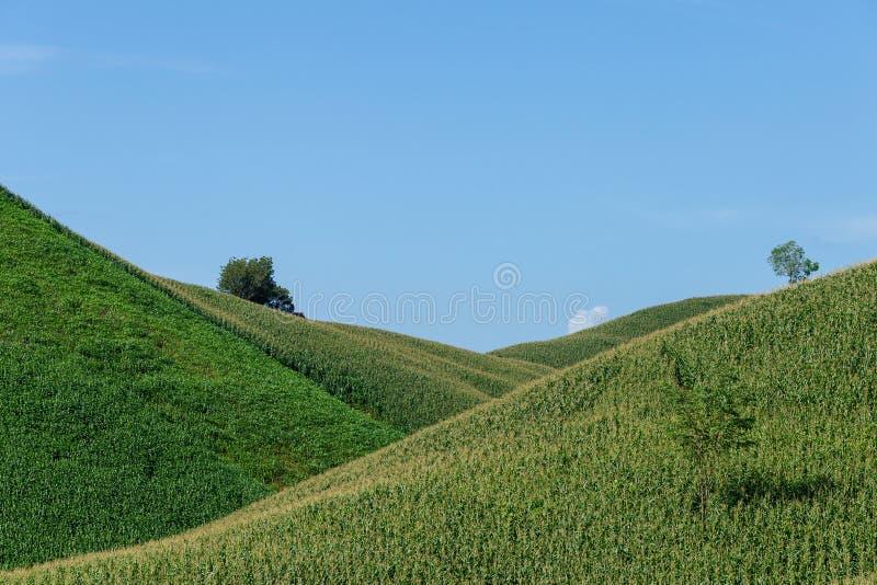 在山的美妙的春天风景 象草的领域 库存图片