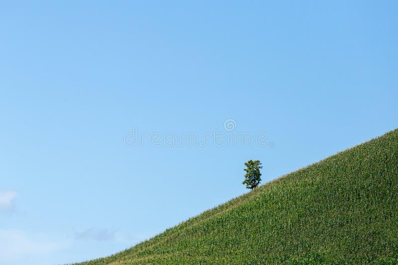 在山的美妙的春天风景 象草的领域 库存照片