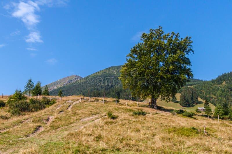 在山的老树 免版税图库摄影