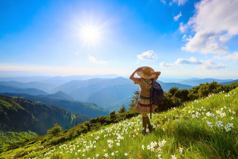 在山的草坪使礼服的行家女孩环境美化 与黄水仙的草 蓝色域绿色风景天空夏天 库存照片