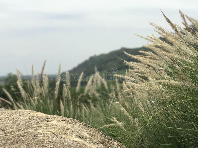 在山的草 免版税库存照片