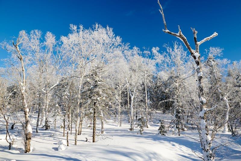 在山的软的霜和蓝天雪scape 库存照片