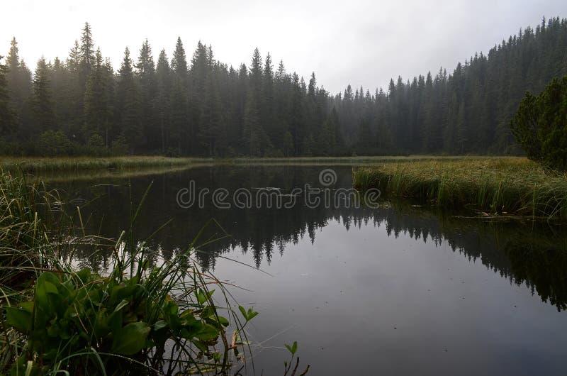 ?? 在山的雾,意想不到的早晨有雾的风景,小山盖了山毛榉森林,乌克兰,喀尔巴汗 免版税图库摄影