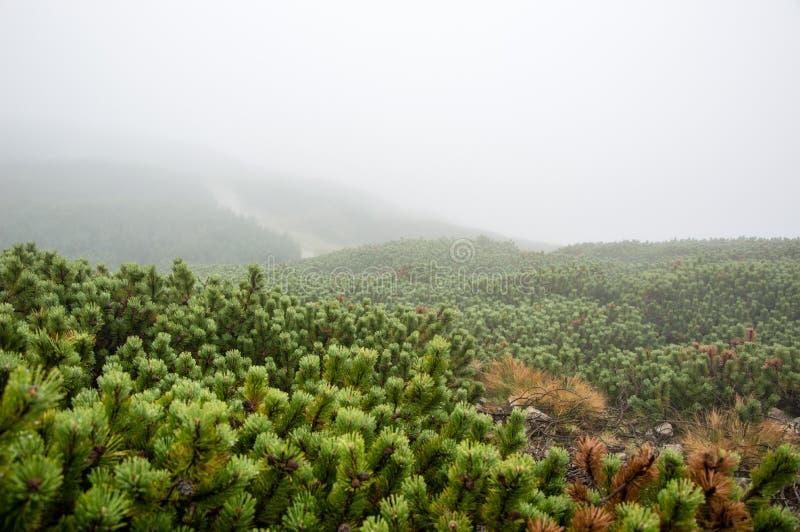 在山的雾 库存照片