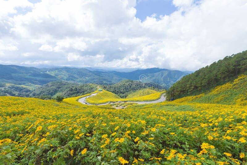在山的领域黄色花 图库摄影