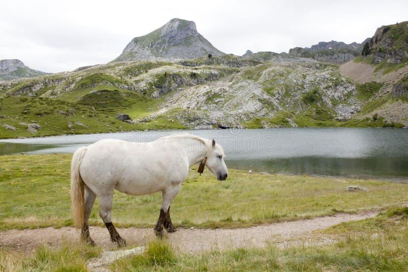 在山的马在一个湖附近在Ayous湖 库存照片