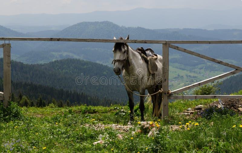 在山的马 自然美好的横向 图库摄影
