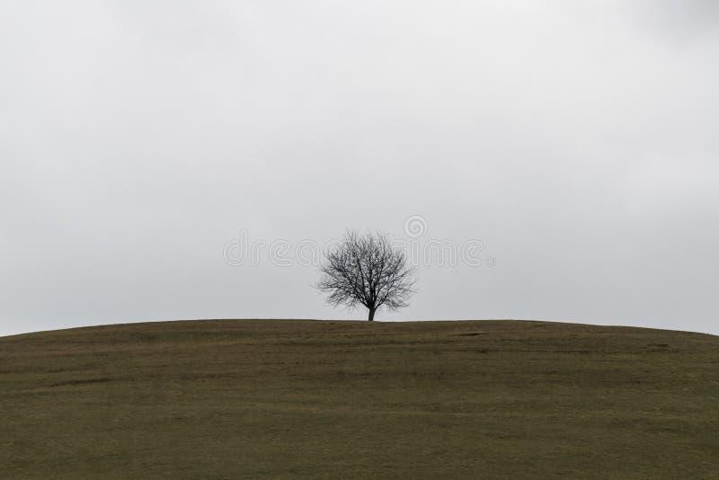 在山的结构树 库存照片