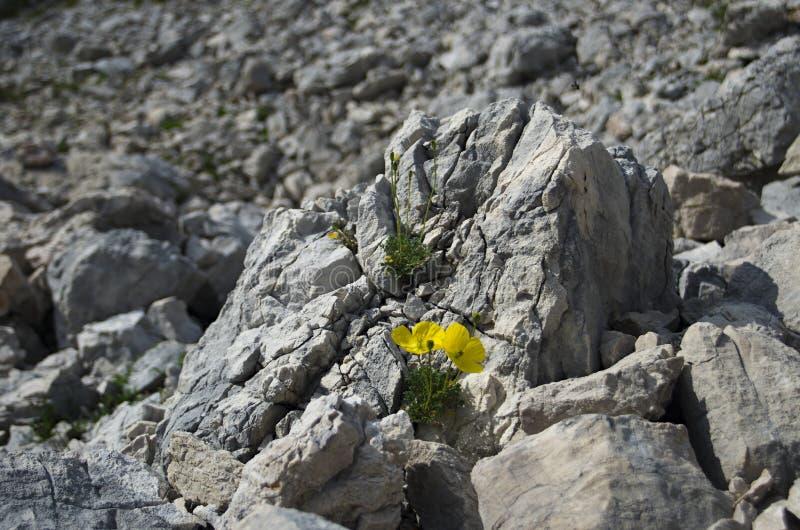 在山的Moonscape III 花,朱利安阿尔卑斯山 图库摄影