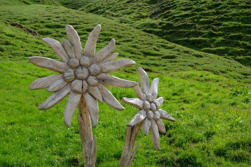 在山草甸的被雕刻的木Edelweiss花 库存照片