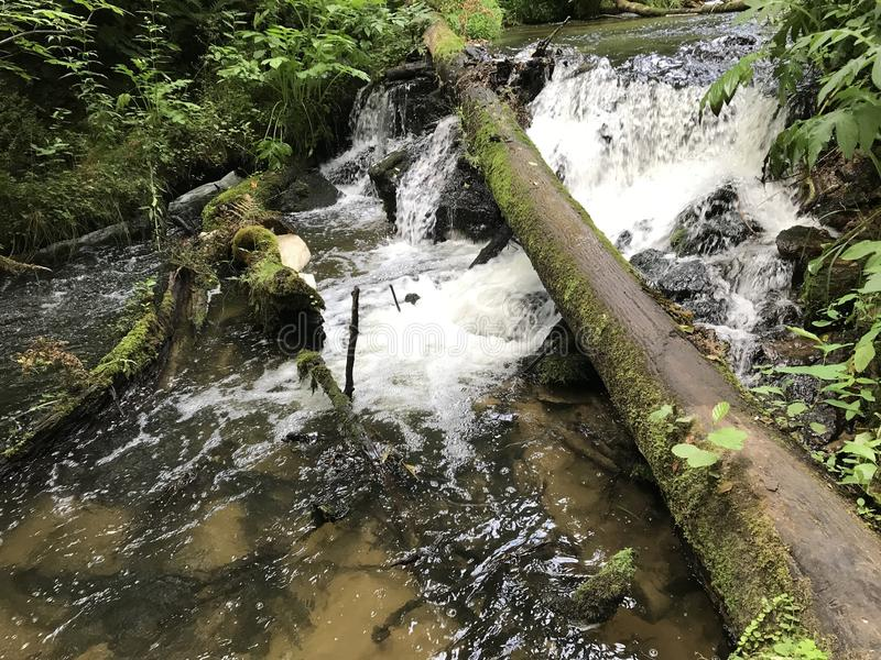 在山迅速水小河的下落的树干 免版税库存图片