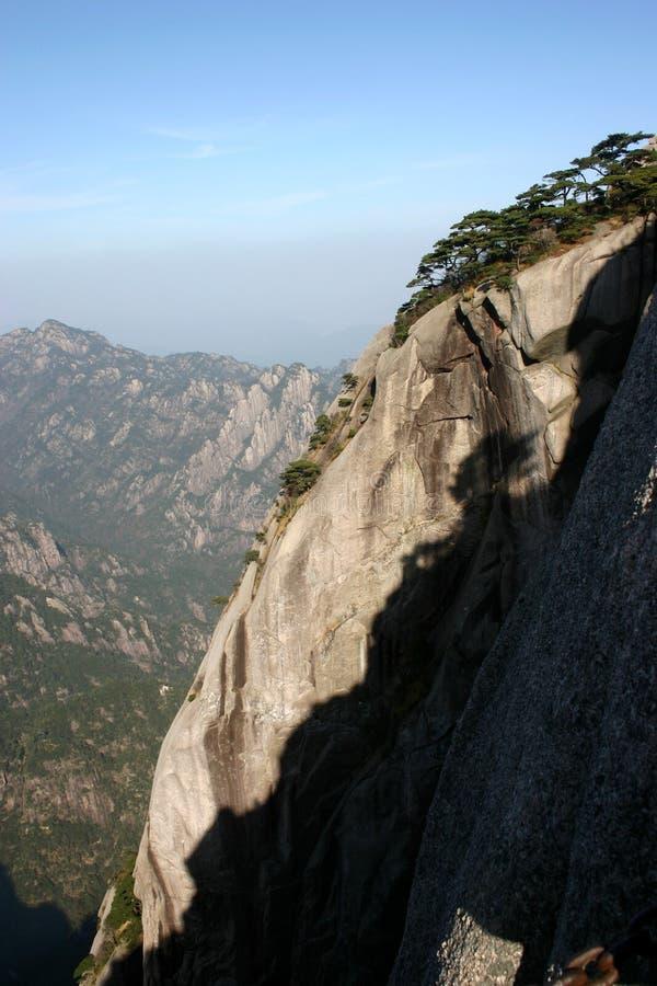 在山顶部的杉树 图库摄影