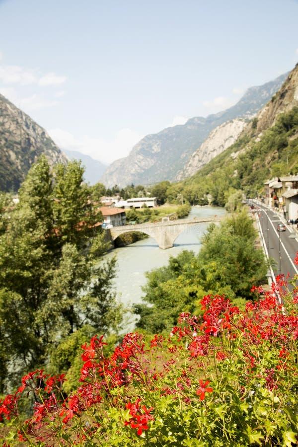 在山风景的红色花 免版税图库摄影