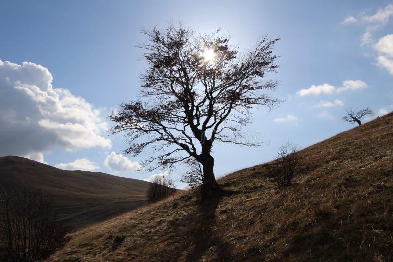 在山bjelasnica的树在萨拉热窝附近 库存照片