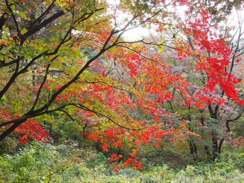 在山Namhan的脚的美好的风景 库存照片