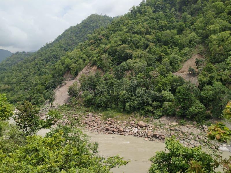 在山owsome视图的绿色树 库存图片
