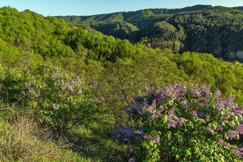 在岩层Stob金字塔附近的春天风景, Rila山,丘斯滕迪尔地区,保加利亚 图库摄影