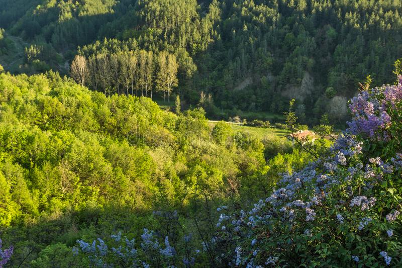 在岩层Stob金字塔附近的春天风景, Rila山,丘斯滕迪尔地区,保加利亚 免版税库存照片