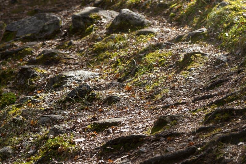 在岩石、石头和绿草的森林足迹在早期的春天 库存照片