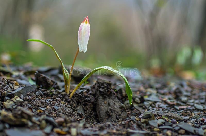 在岩石倾斜的美丽的花 库存照片