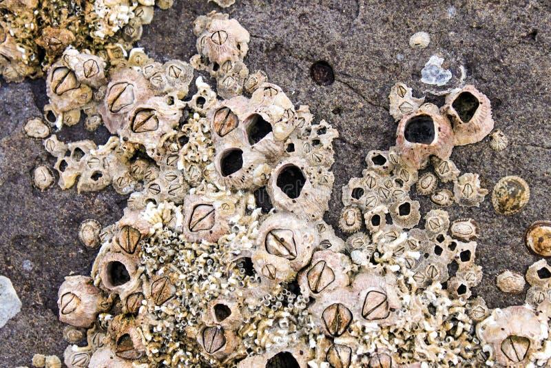 在岩石和壳复的眼镜由海 免版税库存照片