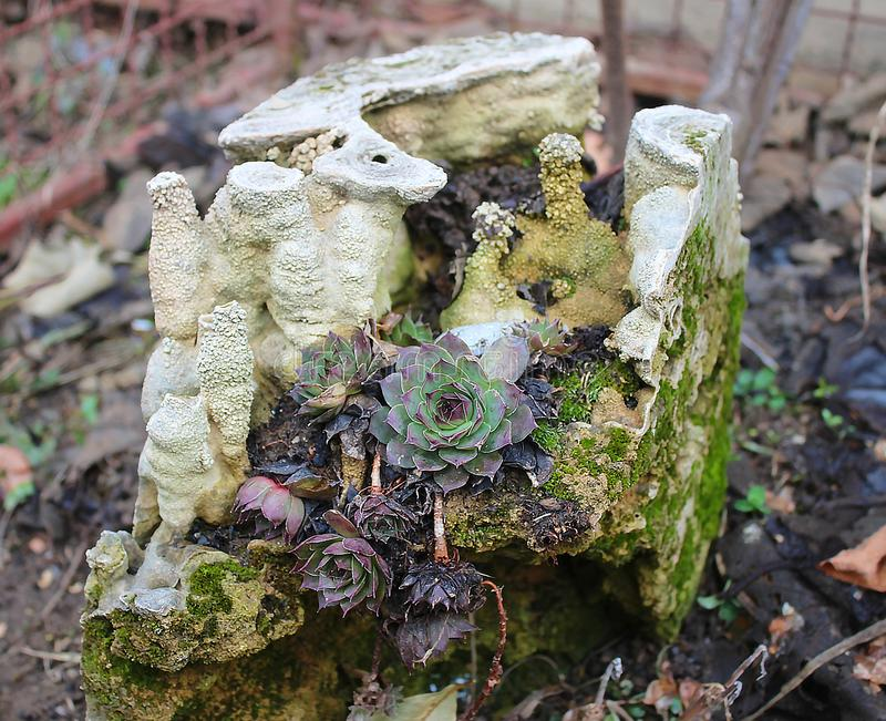 在岩石和平的仙人掌  库存图片